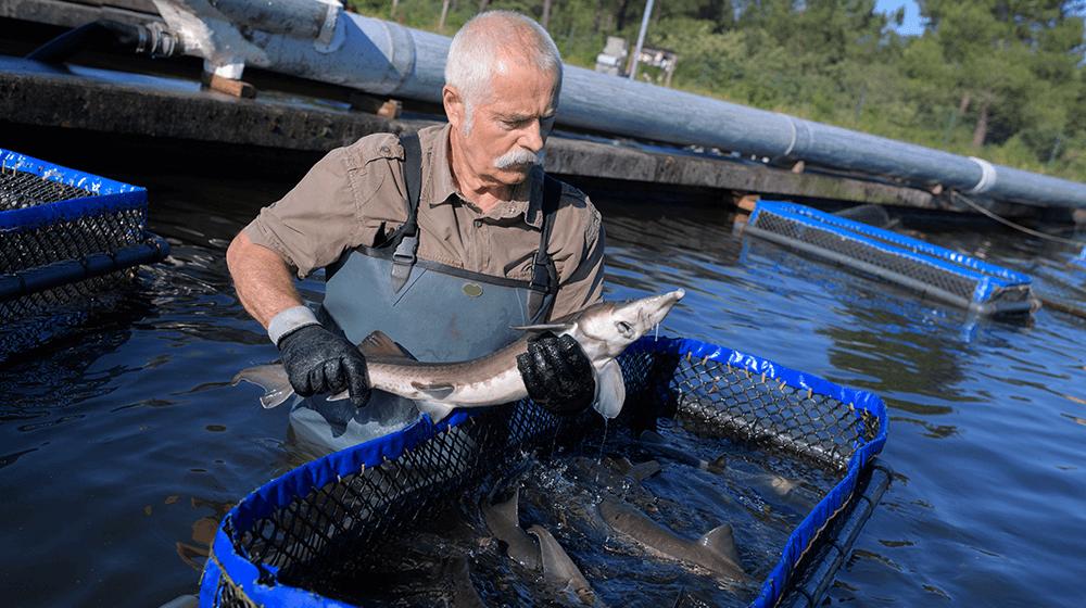 fish-farming-1